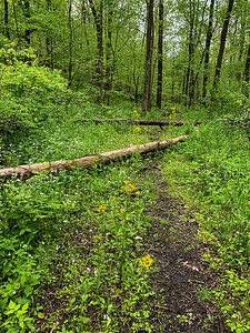 Along the Sand Ford Nature Trail