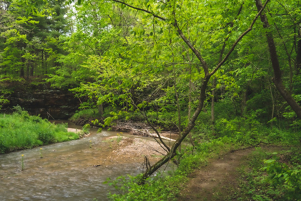 View of Bear Creek from the South Trail