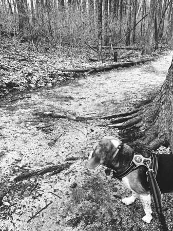 Dexter along the trail