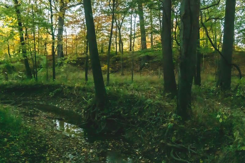 A Stream along the Trail