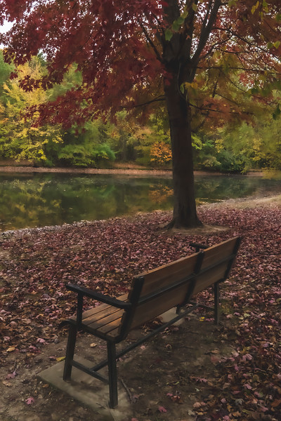 A Bench along the Pond