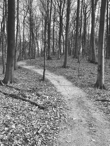 The trail winding through the woods