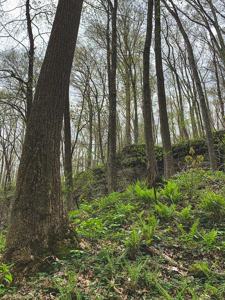 Ferns on the hillside!