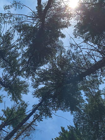 Pine Tree Love!