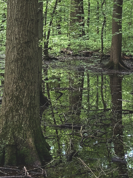 """Another """"Swampy"""" area"""