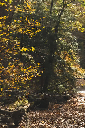 Fall Color along Clifty Creek