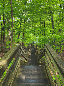 Beech Woods Trail Staircase (view from the top)