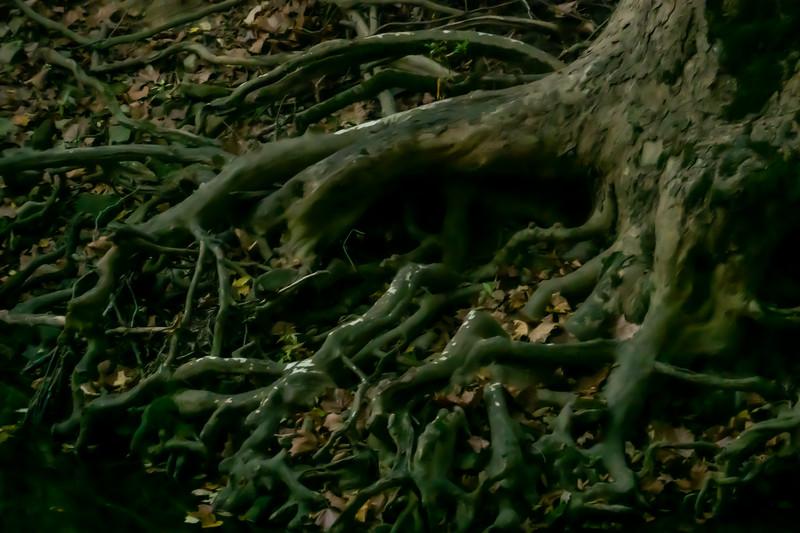 Interesting Tree Roots