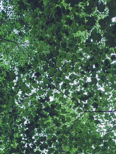Canopy of Green!