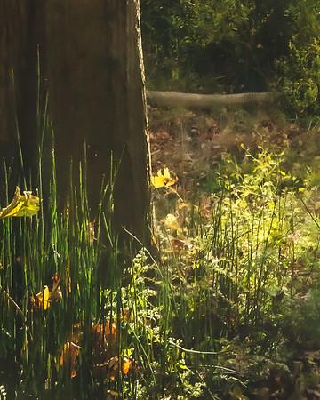 Foliage along the Trail