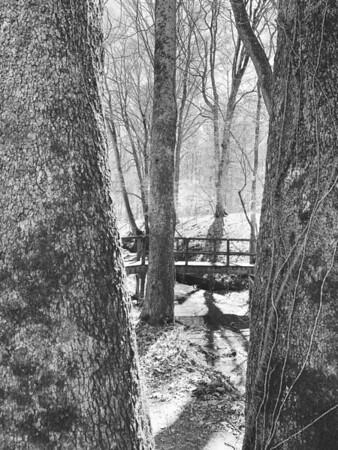 Trail #4