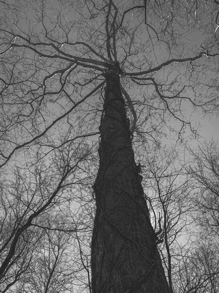 I ❤️ Trees!