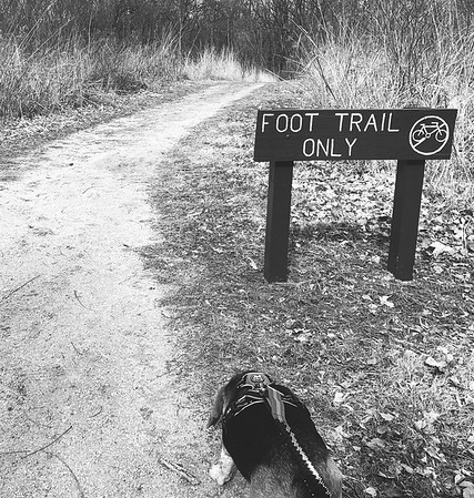 Dexter at the start of the trail