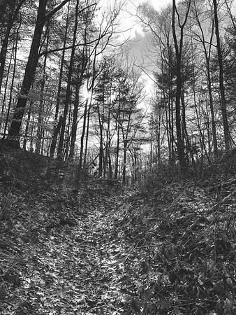 The path off the main road leading to the trails