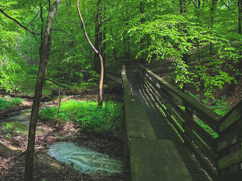 Scenery within the American Beech Woods Nature Preserve