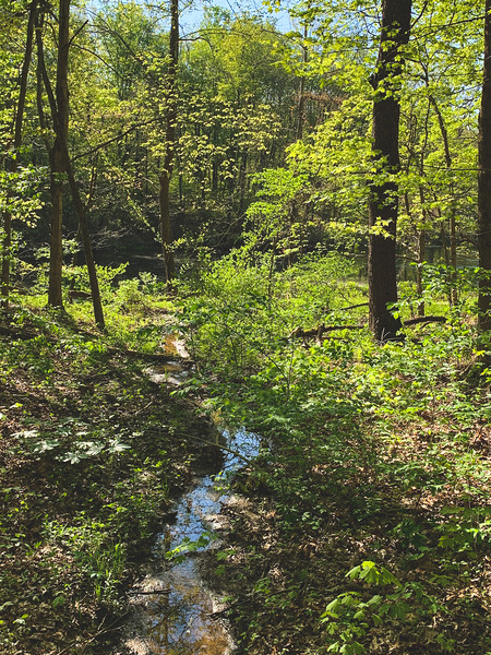 A Stream leading to Lake Lenape