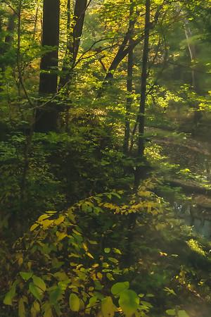 Fall Foliage along McCormick's Creek