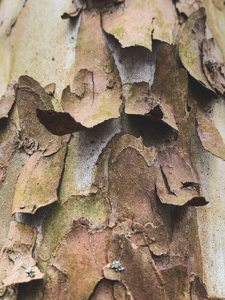 Interesting bark
