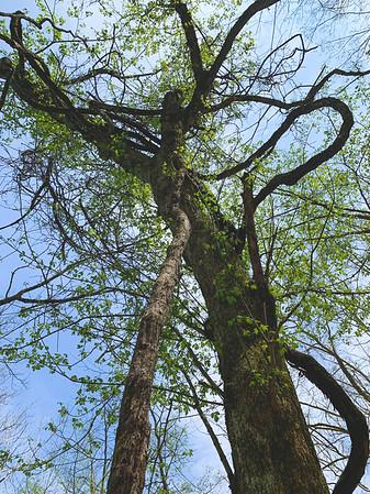 Twisty Tree!