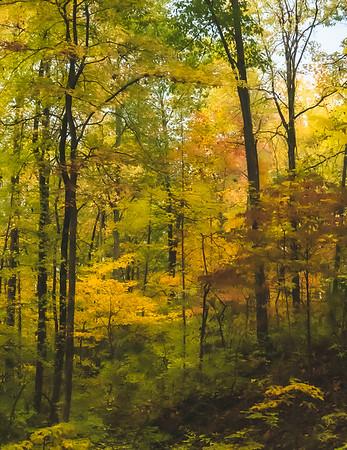 Fall Trees!