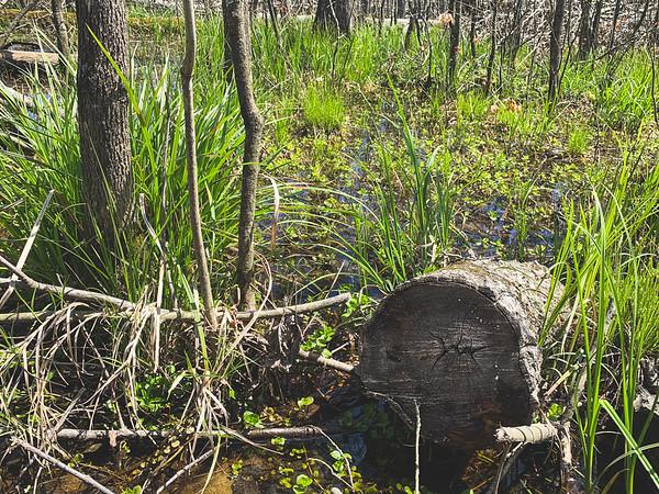 Plenty of greenery in the Marsh