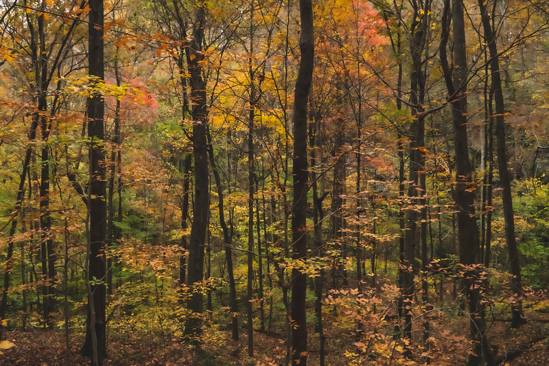 View of the Woods