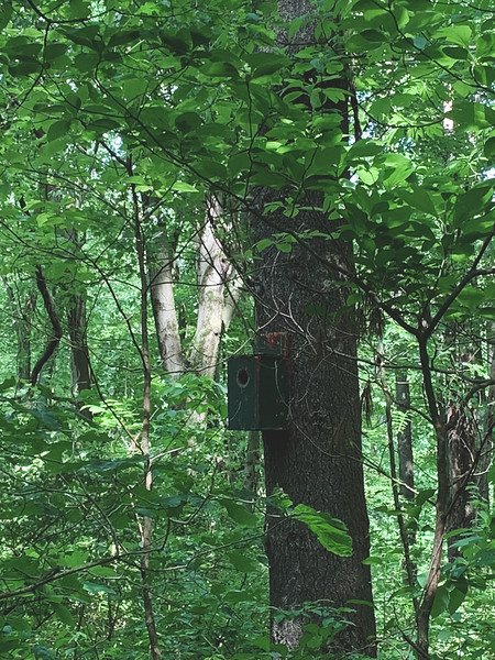 A Bird House in the Woods