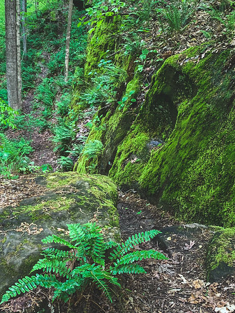 Ferns and Moss on the Rocks