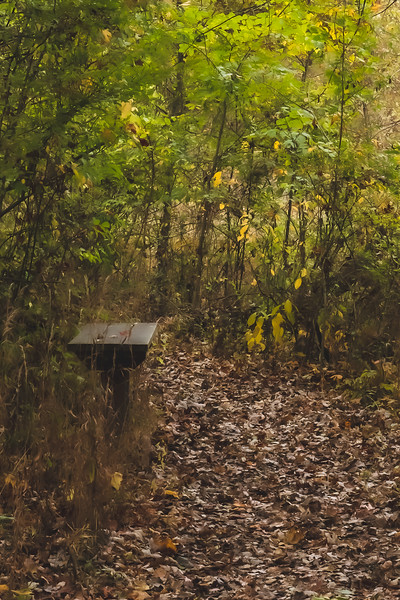 A Bench along the Trail