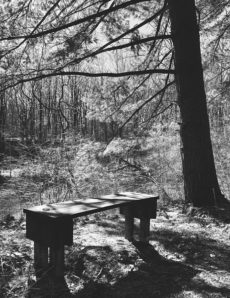 Bench along the trail overlooking the west lake