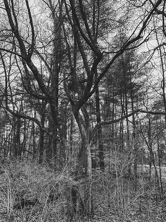 Twisted tree!