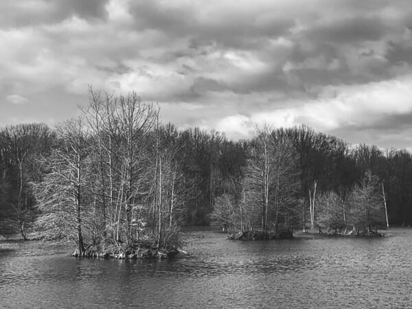 The Wetland Area Lake