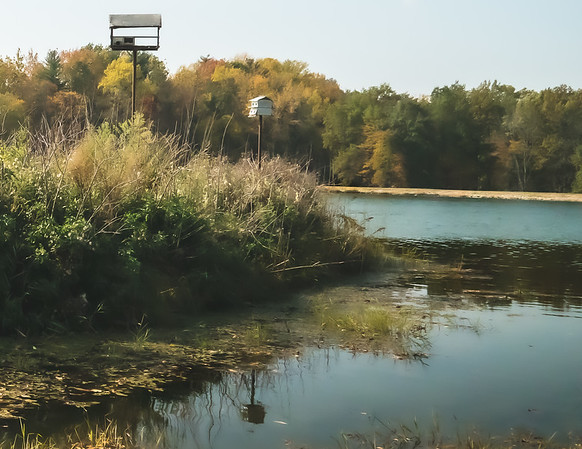 View of Birdhouses on Fowler Lake