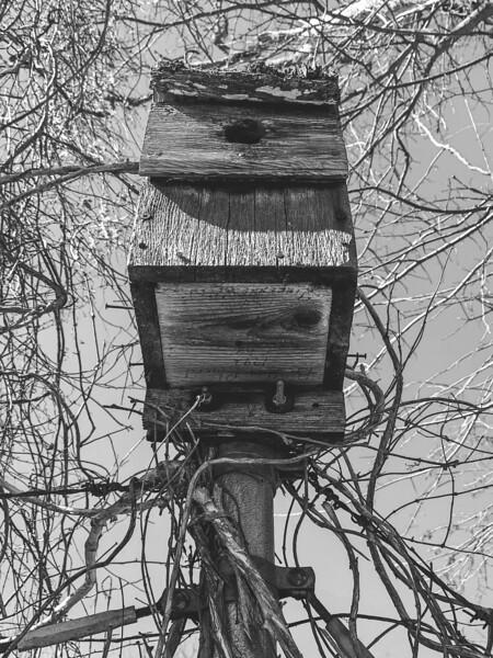 Birdhouse on the fence