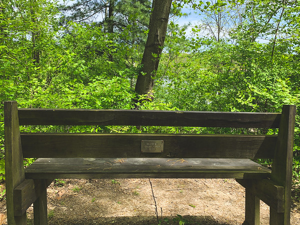 The bench used to have a view of the Irishmen Covered Bridge before Mother Nature took over