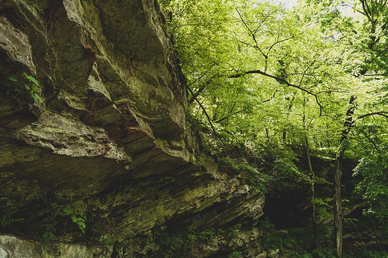 The Sandstone Cliffs