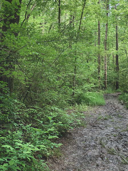 Along the Muddy Trail