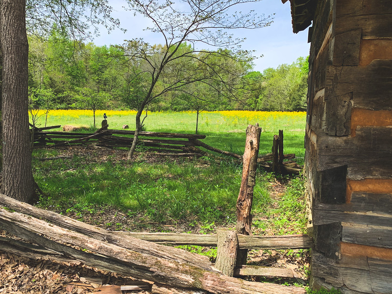 A Field of Yellow behind the Pioneer Village