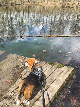 Dexter checking out what's left of the fishing dock
