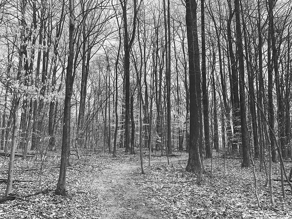 The trail and woods