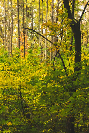 Some Color in the Woods