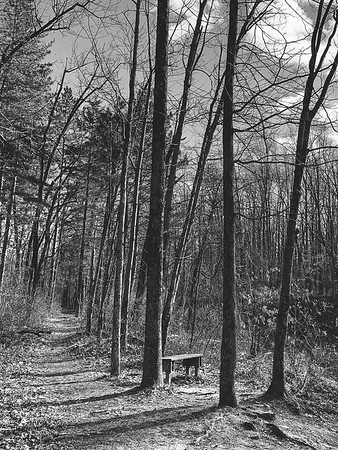 A second bench along the trail overlooking the lake on the west side