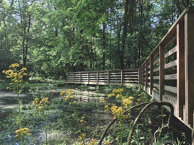 A Bridge along the backside of the Pond