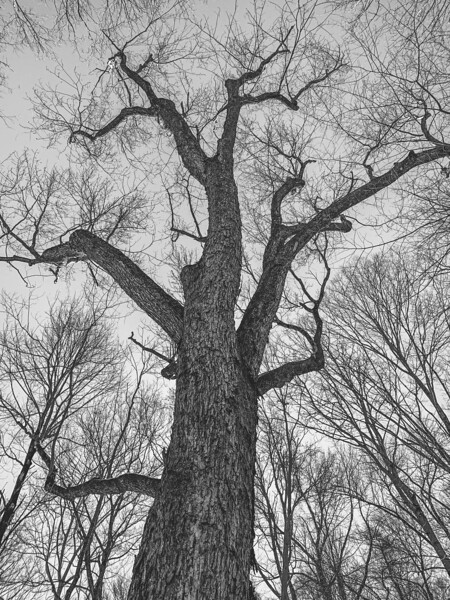 Tree 💕