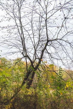 Nearly Bare Tree