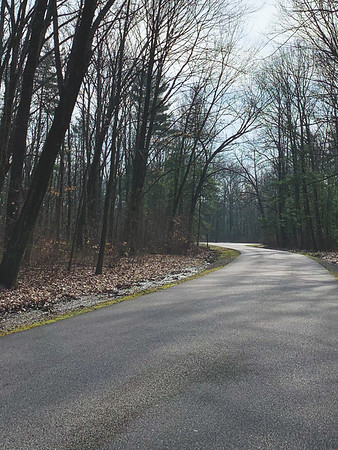The park road north of the entrance (trail 7 crosses this road)