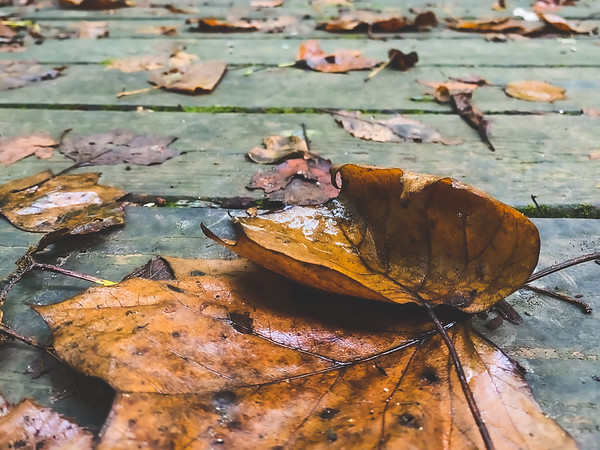 Fallen Leaves on the Bridge