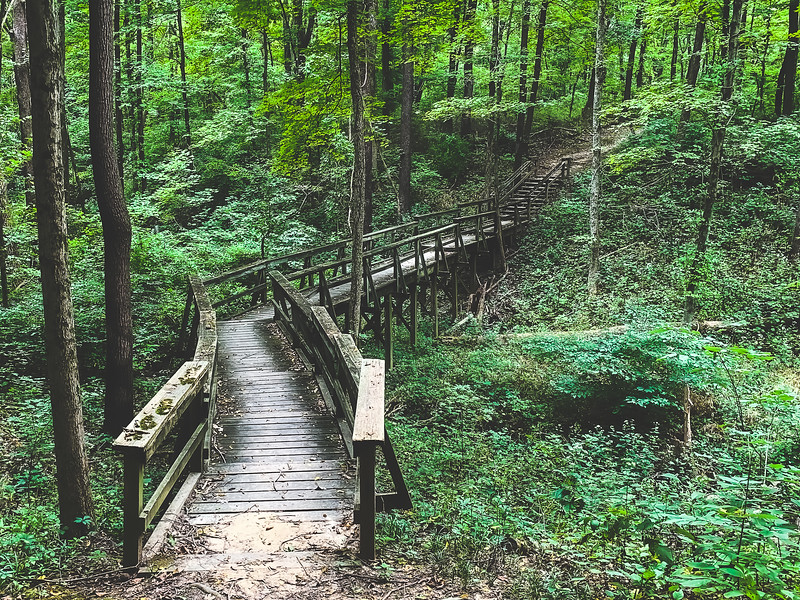 A Boardwalk and Stairs along the Trail