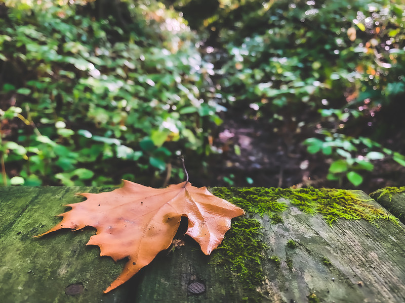 Fallen Leaf on the Bridge