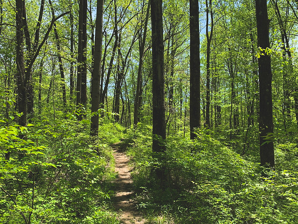 The Trail (this trail is not gravel like the other Vigo County Parks)